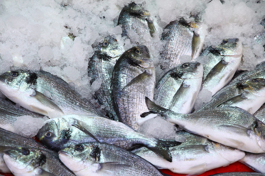 bigstock-Herring-Fish-In-the-Ice-35075417