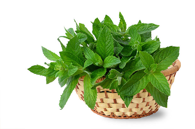 bigstock-Mint-Leaves-47892566