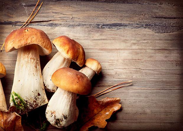 bigstock-Mushroom-Boletus-over-Wooden-B-51328441