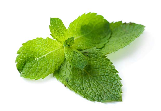 bigstock-Fresh-mint-leaves-isolated-on--48048929