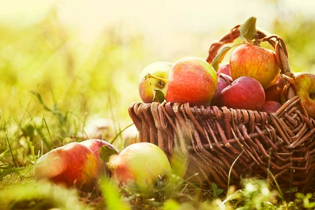 bigstock-Organic-Apples-In-Summer-Grass-43381285