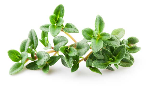 bigstock-Thyme-Isolated-On-White-Backgr-53229979