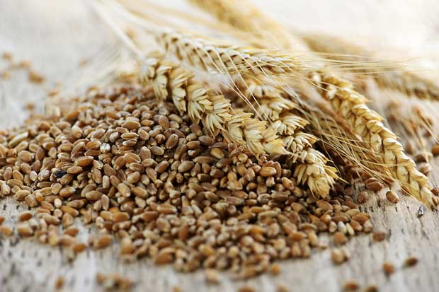 bigstock-Whole-Grain-Wheat-Kernels-Clos-7343775