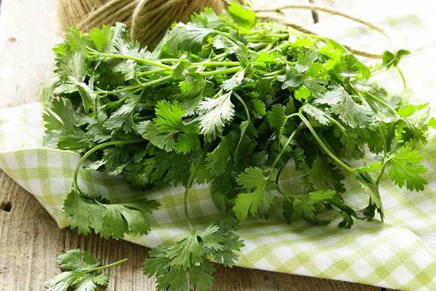 bigstock-bunch-of-fresh-green-coriander-48307784