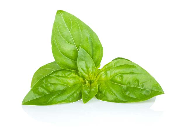 bigstock-Fresh-basil-Isolated-on-white-53021497
