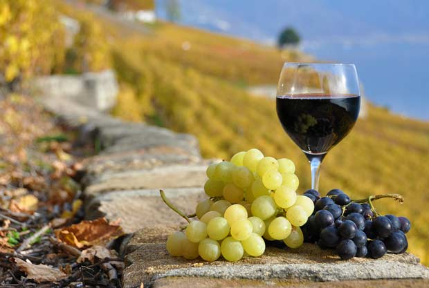 bigstock-Red-wine-and-grapes-on-the-ter-26611508